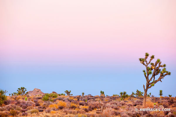 DESERT DUSK LIGHT JOSHUA TREE NATIONAL PARK CALIFORNIA AMERICAN SOUTHWEST DESERT LANDSCAPE