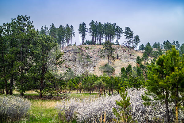 A beautiful overlooking view of nature in Custer State Park, South Dakota