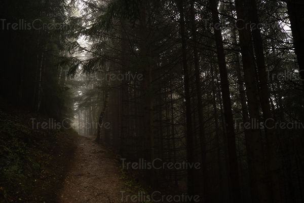 Hiking a dirt path into a dark, misty evergreen forest in France