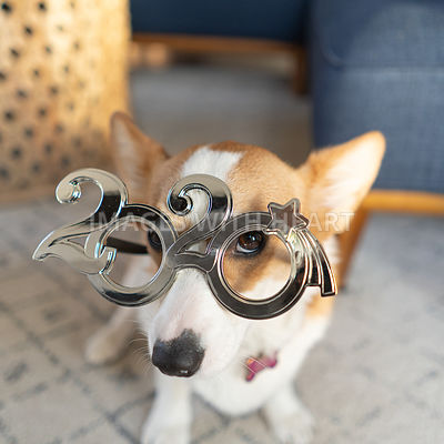corgi wearing 2020 new years glasses