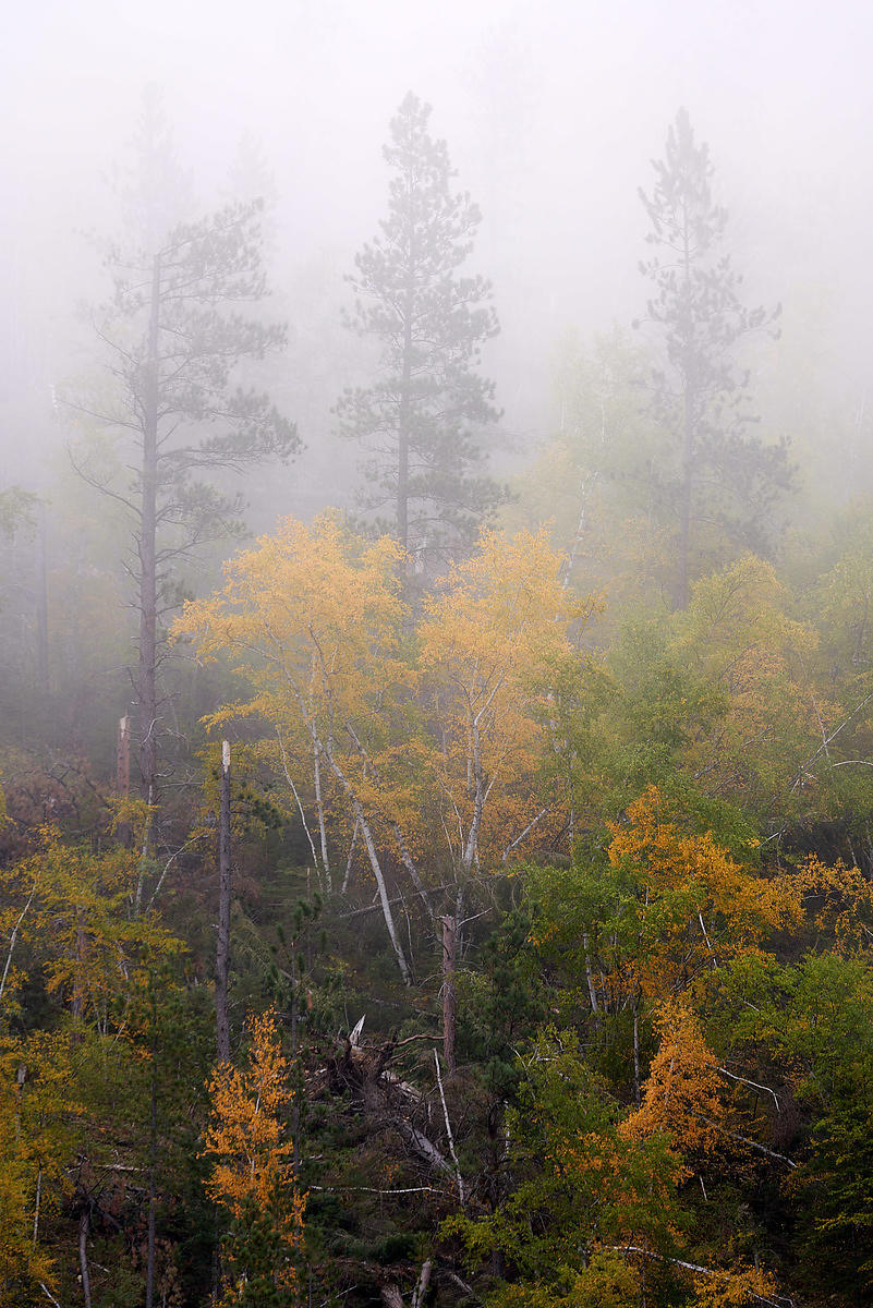 Mystical_Spearfish_Canyon