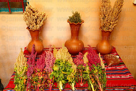 Different colour varietes of quinoa (Chenopodium quinoa) on display in hostel, Cariquima, Chile