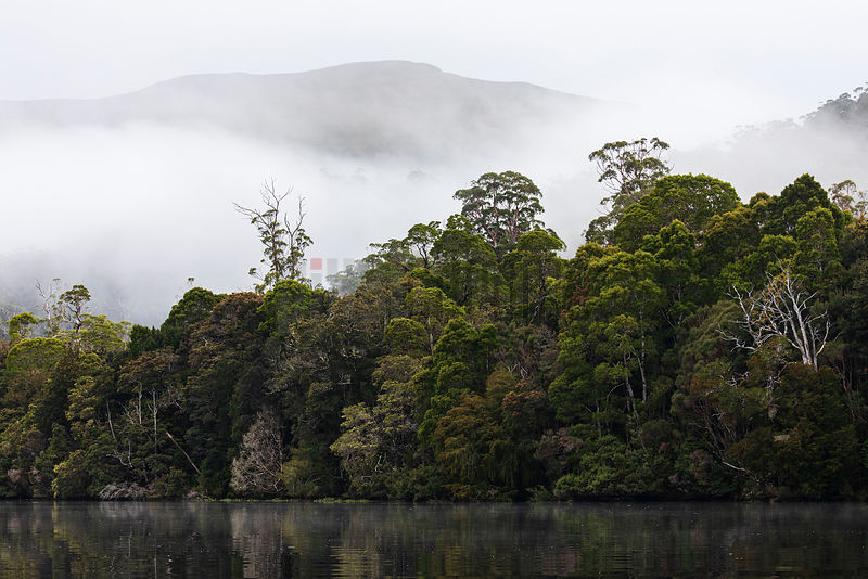 Tarkine Rainforest along the Pieman River at Dawn