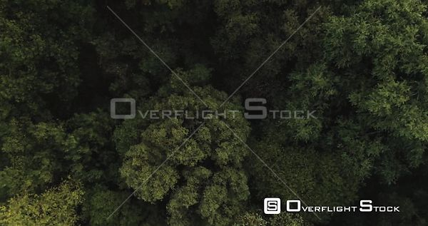 Dense green woodland birds eye view perspective rising up, Hertford, England