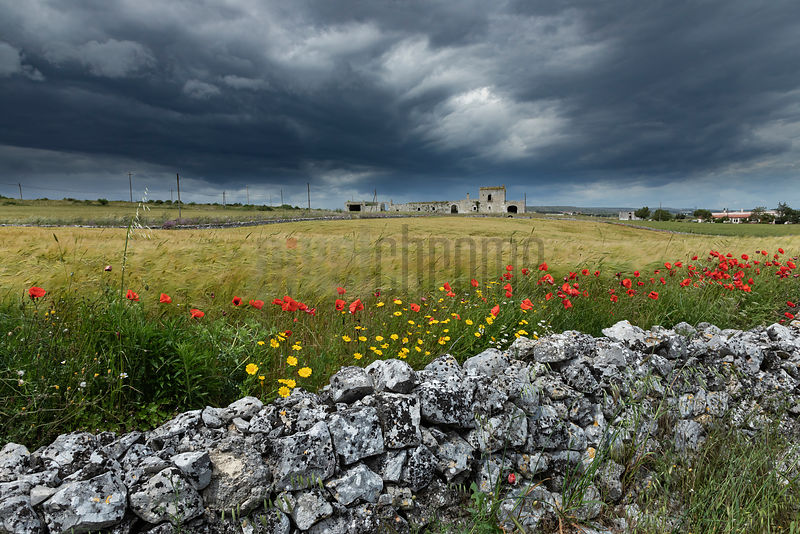 Dry Stone Wall, Wildflowers and Storm Clouds