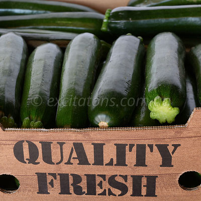 BlackJack Zucchini at market