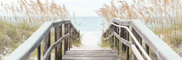 Beach Boardwalk and Sea Oats Grass Panorama Photoblack