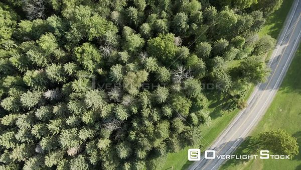 Road and Forest Top Down Mendon Ponds Park Honeoye Falls Near Rochester New York Drone View