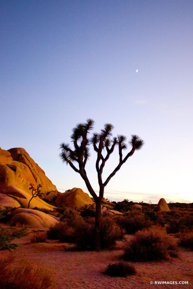 JUMBO ROCKS JOSHUA TREE NATIONAL PARK COLOR VERTICAL