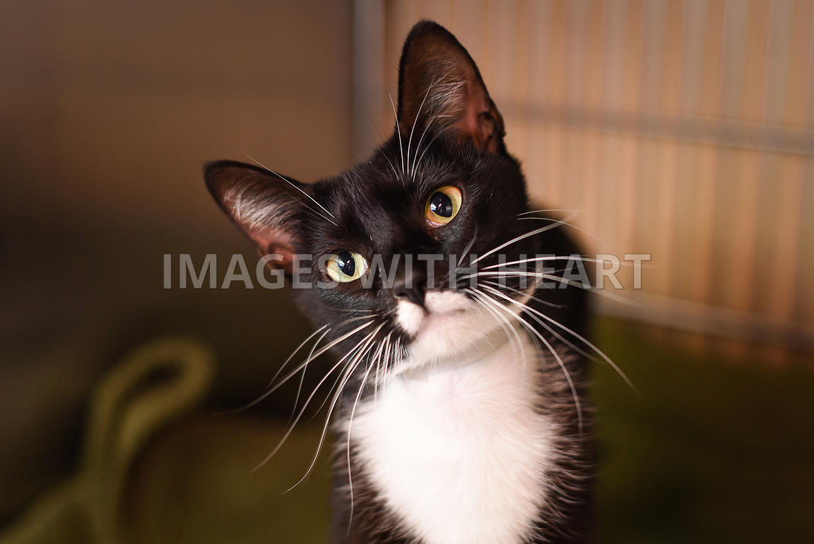Black and white cat in kennel