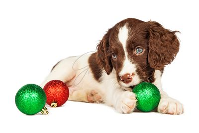 Puppy Playing With Christmas Ornaments