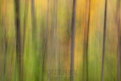 sctrforestabstract-3