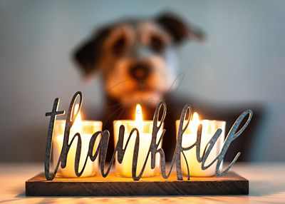Thankful Gratitude Candles With Dog in Background