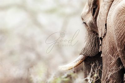 Cropped Photo of Elephant With Copy Space