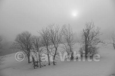 RC_snow_fog-3444_December_21_2020_NAT_WHITE