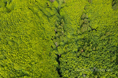 Aerial of Green Tropical Like Forests and Vegetation at Ilha Das Flores Island Near Poco Ribeira Do Ferreiro at the Azores, P...