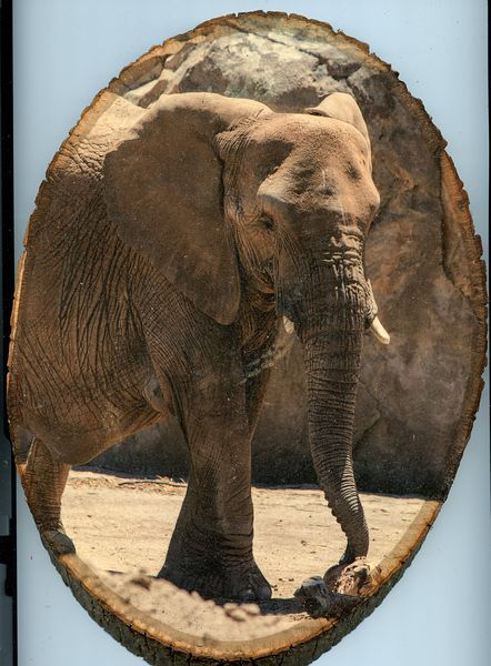 Elephant_large_wood
