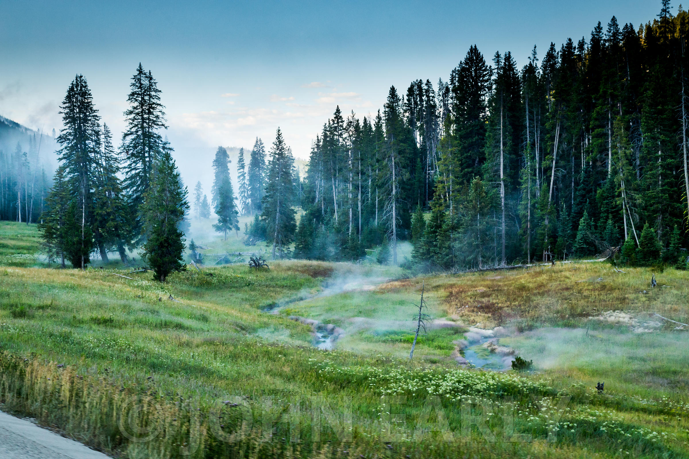 Steamy Forest Meadow In the Early Morning Light