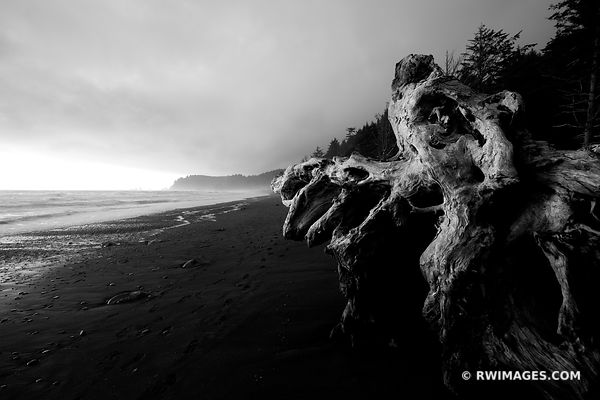 DRIFTWOOD RIALTO BEACH OLYMPIC NATIONAL PARK WASHINGTON BLACK AND WHITE