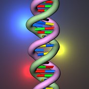 DNA single base mutations light glow