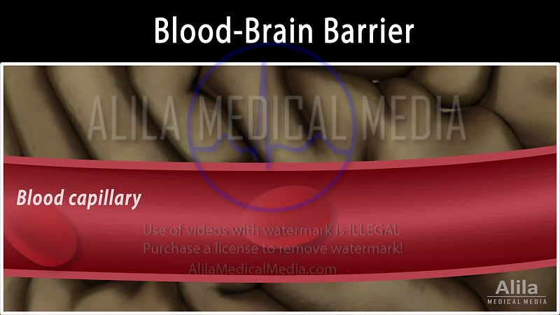 Blood brain barrier NARRATED animation