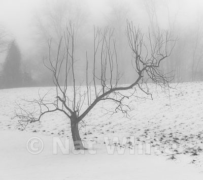 RC_snow_fog_with_tree-3439_December_21_2020_NAT_WHITE