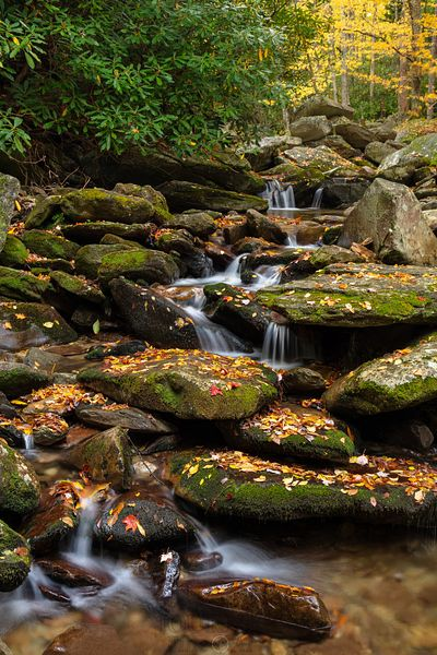 Mountain Stream in Autumn Vertical