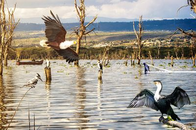 Lake Naivasha Scene With Fishermen and Birds