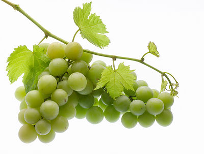 Autumn Crisp Grapes (pbr)