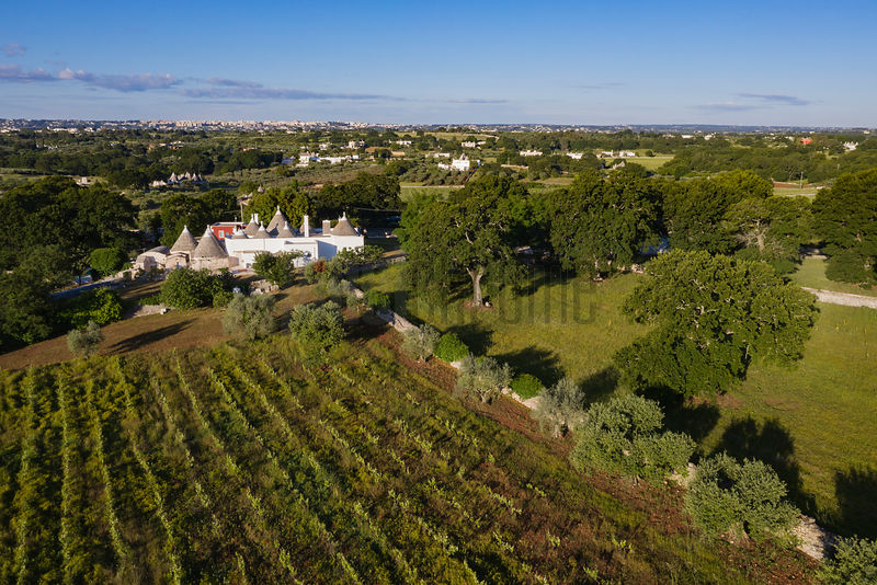Grapevines, Trulli Houses and Oak