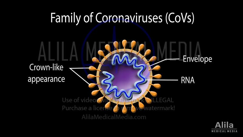 SARS-CoV-2, the virus behind COVID-19 NARRATED animation