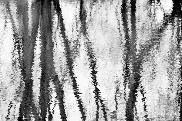 NATURE ABSTRACT RIVER WATER REFLECTIONS WINTER TREES CHICAGO NORTH SHORE RYERSON WOODS FOREST PRESERVE RIVERWOODS ILLINOIS MI...