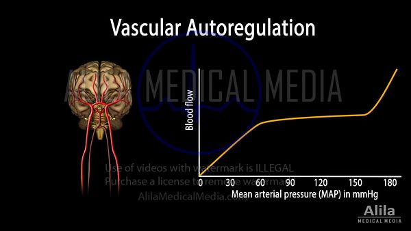 Vascular autoregulation of blood flow NARRATED animation