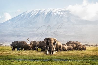 Tusker Tim and Family in Front of Kilimanjaro