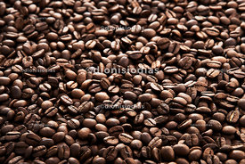 Roasted coffee beans in macro with blur