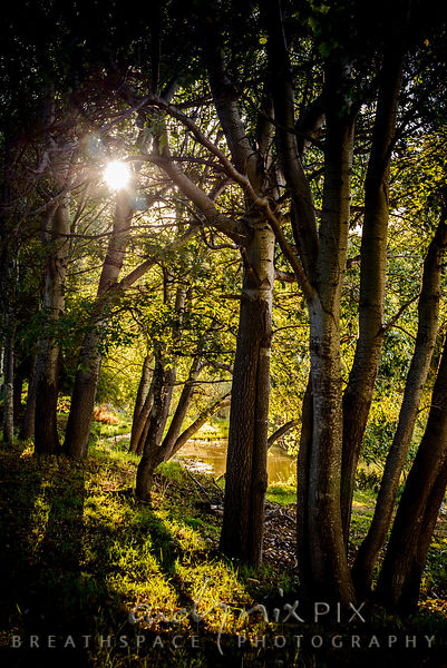 Sunlight through a grove of trees