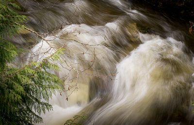 Rushing river water and cedar branches