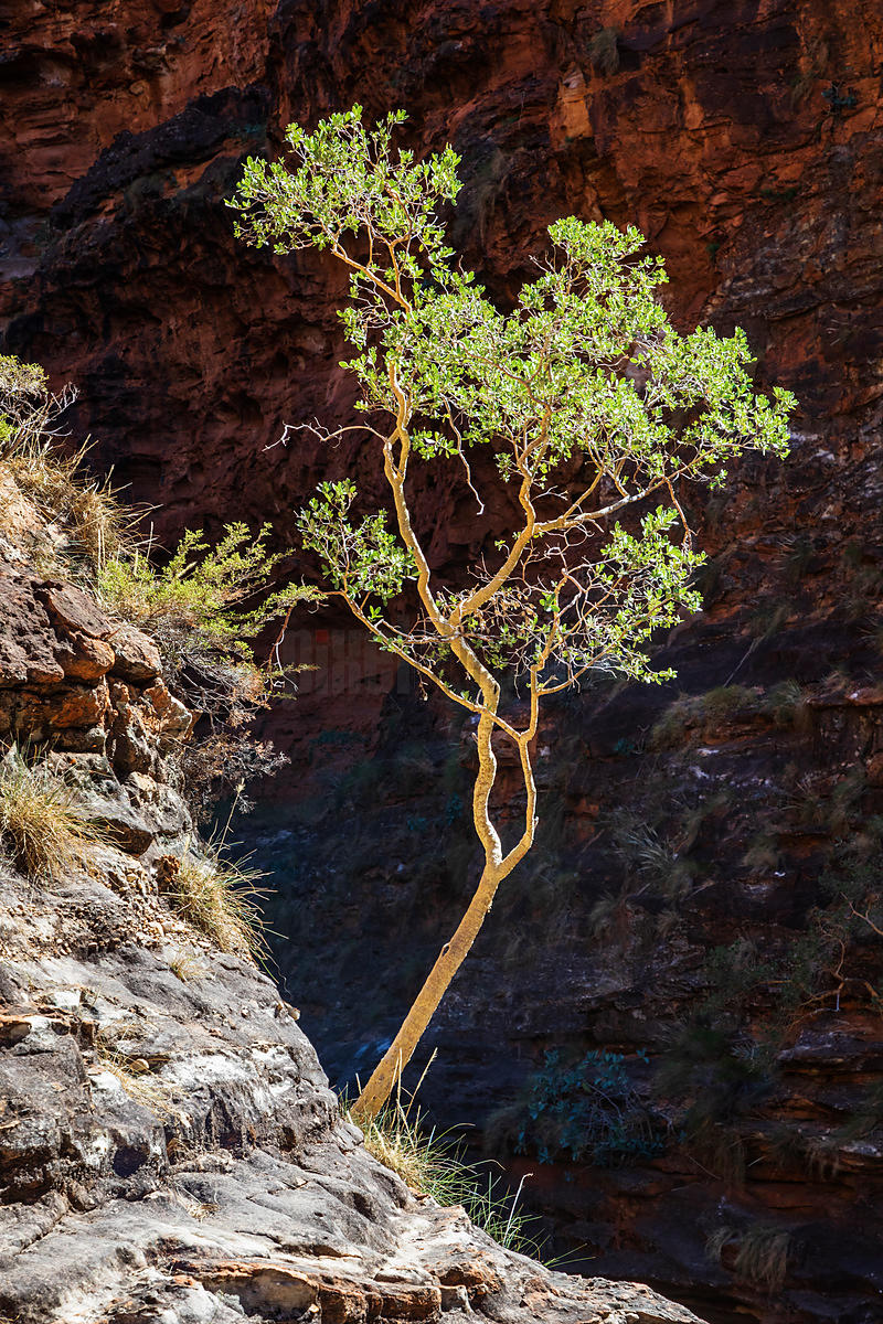 Backlit Tree on the Track to Cathedral Gorge