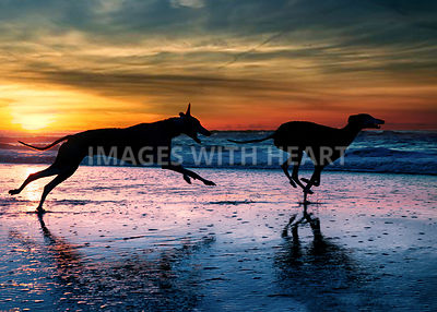 two dogs running on beach during sunset