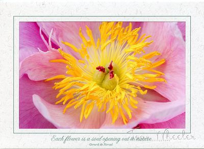 greeting_cards286
