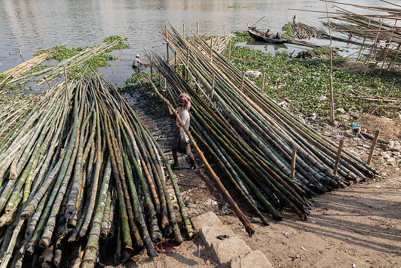 Off-loading Cane on the Banks of the Buriganga River