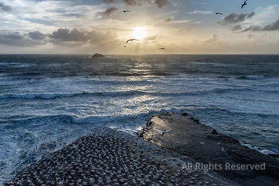Aerial Landscape View at Sunset Sunrise Wit Amazing Sunbeams Over the Sea Water Showing Australasian Gannets Flying Over the ...