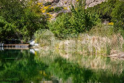 A beautiful clear water desert oasis in the middle of Whitewater Preserve in California