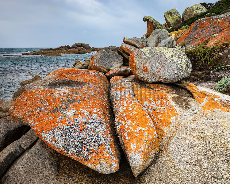 Lichen Covered Granite Rocks at Eddystone Point