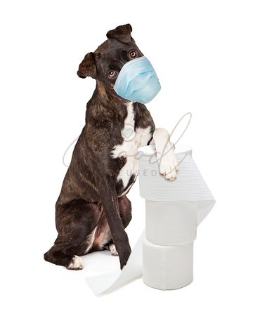 Dog Wearing Face Mask Holding Bath Tissue Toilet Paper