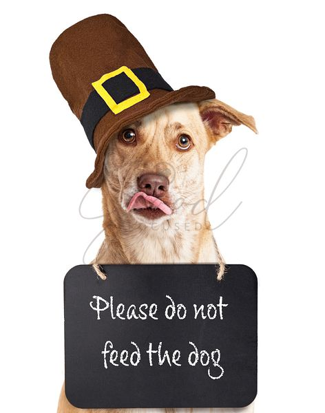 Do Not Feed Dog on Thanksgiving