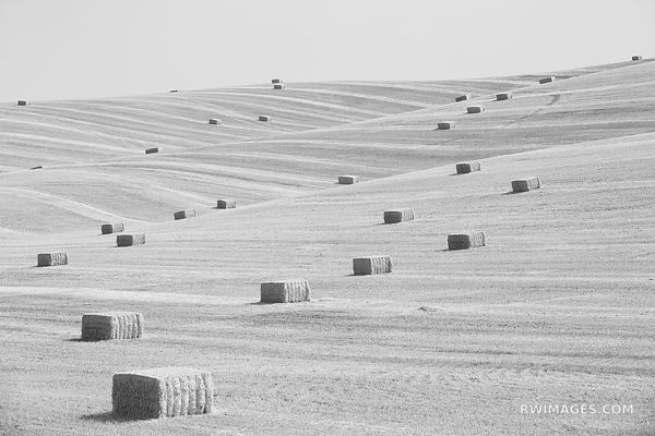 HAY BALES SUMMER HARVEST PALOUSE WASHINGTON BLACK AND WHITE LANDSCAPE