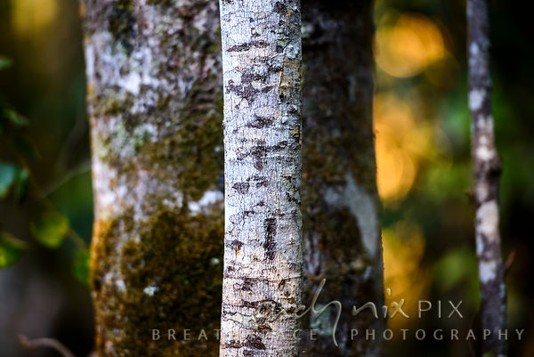 Detail of textured tree trunks