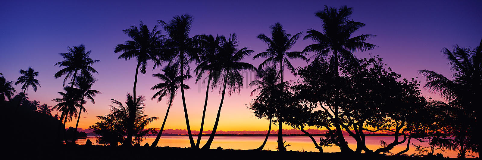 Silhouette of Palm Trees on Bora Bora Sunset