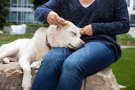 Large White Dog Resting Head on Woman's Lap with Eyes Closed